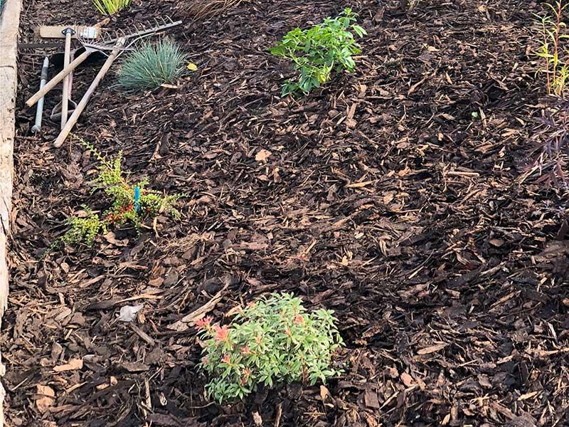 Landscape gardening mulching