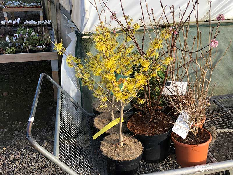 Landscape gardening planting